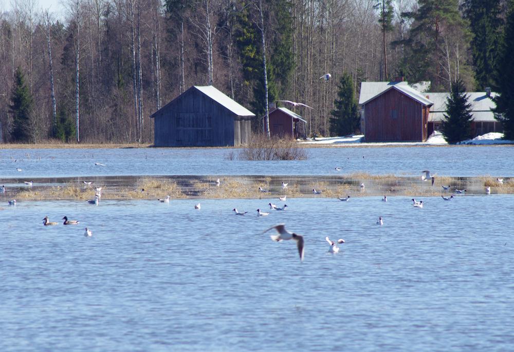 Tulviva Kytäjoki
