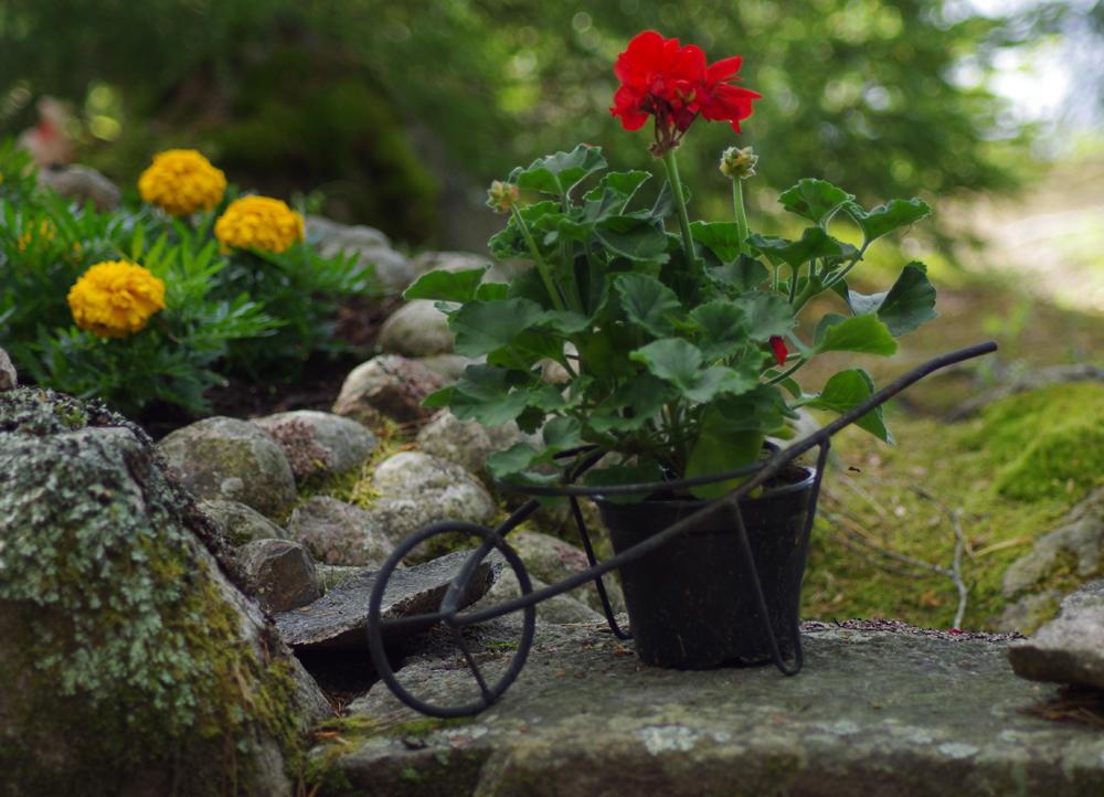 Kukkakärryt