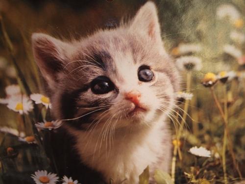Kissakuva ulkohuussimme seinällä (Ritvan kuva)
