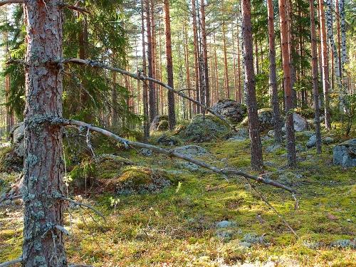 Suosikkimetsääni, Hausjärvi