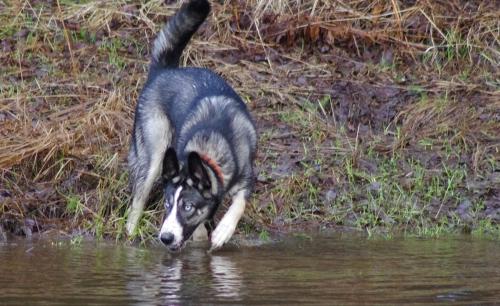Koiratuttavuus Kittelässä