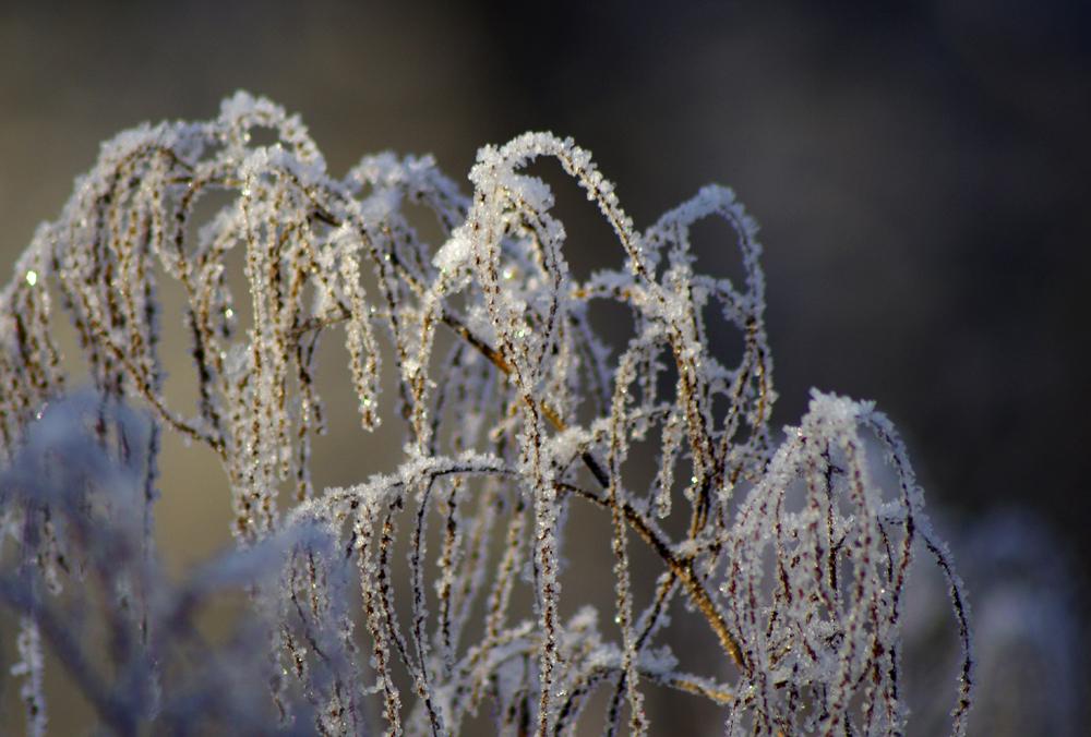 Talven taidetta