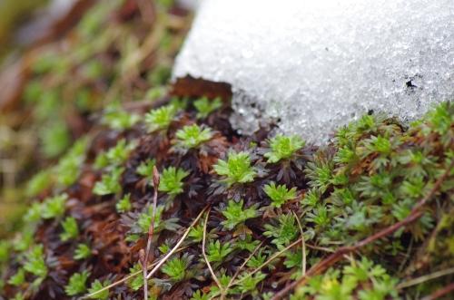 Jääkerros antaa tilaa kasvulle