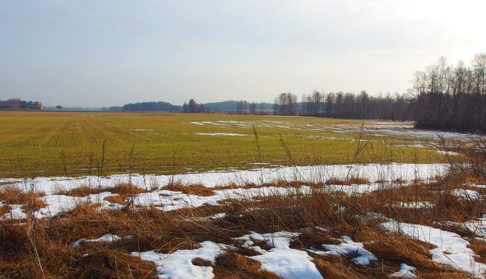 Maaliskuun pelto