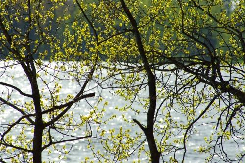Kevätkuosi