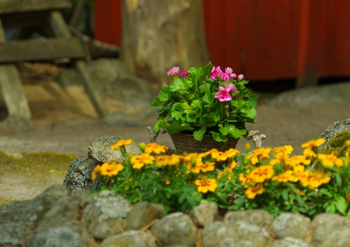 Mökkipihan kukkia