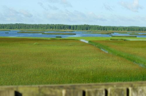 Ridasjärvi lintutornista