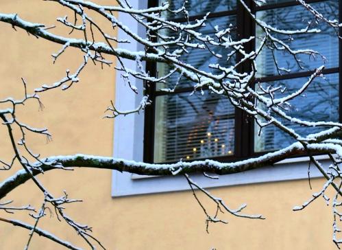 Ikkuna ja luminen oksa