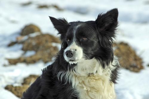 Tähystyspaikalleni saapui myös viereisen maatilan koira Koola