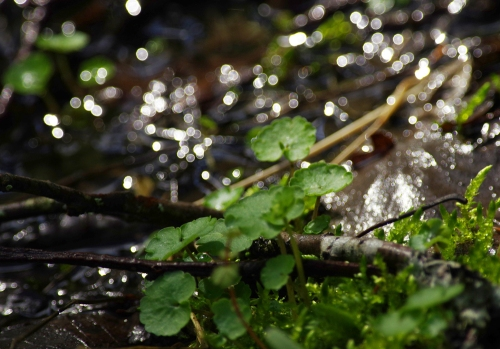 Kevään kimallus syvemmällä metsässä