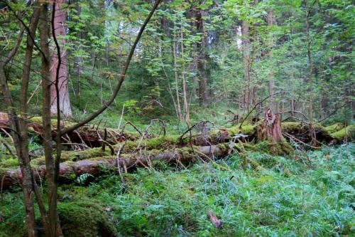 Sveitsin luonnonpuistoa, Hyvinkää